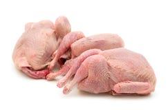 quail rå tre Arkivfoto