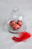 Quail red easter eggs on glass dome grey concrete background. Stock Images