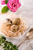 Quail's eggs. A fresh and tasty quail's eggs Royalty Free Stock Images