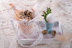 Quail's eggs. A fresh and tasty quail's eggs Stock Images