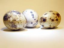 Quail's eggs. A group of three quail's eggs Stock Photos