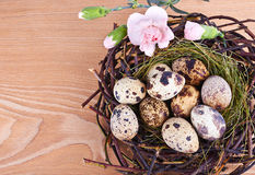Quail's Eggs and Feathers in a Easter Nest Stock Photos