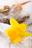 Quail's eggs. A fresh quail's eggs and Royalty Free Stock Photos