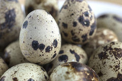 Quail's eggs Royalty Free Stock Image