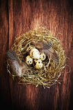 Quail's Eggs in a Nest Royalty Free Stock Images