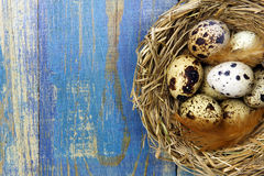 Quail's eggs in a nest on blue wooden background and copy space Stock Photos