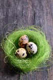 Quail's eggs in a nest Stock Images
