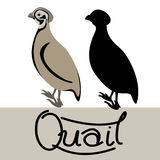 Quail  vector illustration style Flat black silhouette Royalty Free Stock Image