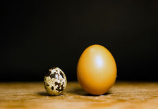 Difference in size between Quail vs Chicken Eggs Royalty Free Stock Image