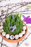 Quails egg on grass. In a brown flowerpot Stock Photo