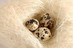 Quails eggs Royalty Free Stock Image