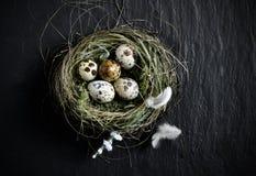 Quails Eggs Aerial Stock Photos