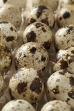 Quails eggs. In a box Stock Photography