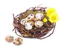 Quails Eggs  in a nest isolated Royalty Free Stock Photos