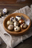 Quails eggs Royalty Free Stock Photo
