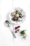 Quails Eggs. Victorian dish with fresh quails eggs with crested Merlot flowers and antique silver spoon on white. Copy space Royalty Free Stock Photos