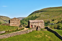 Quaint old stone barns. Surrounded by dry stone walls enclosing green fields on the gently rolling hills in Swaledale in the Yorkshire Dales National Park royalty free stock image