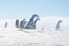 Quaint snow-covered trees Royalty Free Stock Photo