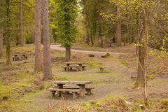 Picnic tables in the woods. A quaint spot in a wooded area with picnic tables and a road leading to the area. A great way to promote eating alfresco and family Royalty Free Stock Image