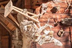 A Quaint tree root Royalty Free Stock Photo