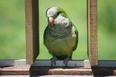 Quaker Parrot sur la barrière en bois Images libres de droits