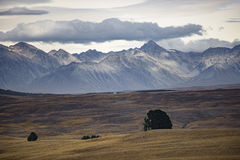 In qualche luogo in Nuova Zelanda Fotografie Stock Libere da Diritti