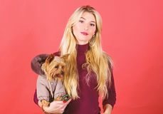 Quali razze del cane dovrebbero portare i cappotti La donna porta l'Yorkshire terrier I cani hanno bisogno dei vestiti Abbraccio  immagini stock libere da diritti