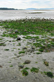 Qualicum Beach Royalty Free Stock Images