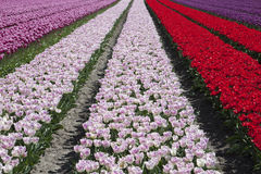 Qualidade de cores naturais Fotos de Stock Royalty Free