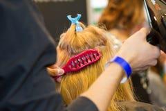 Qualifications de coiffeur de démonstration Images stock