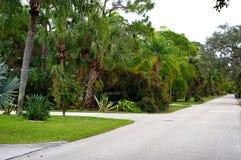 Qualis går den frodiga tropiska gatan Royaltyfria Foton