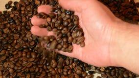 Qualità dei chicchi e del controllo di caffè della gru a benna della mano dell'uomo video d archivio
