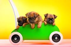 Qualità dello studio del carretto di verde del giocattolo di Griffon Dog Puppy Immagini Stock