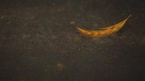 Qualità dello studio della piuma