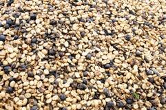 Qualità eccellente del caffè dalle migliori piantagioni Fotografia Stock