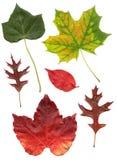 Qualität gescannte verschiedene Blätter lizenzfreie stockbilder