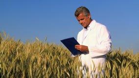 Qualitätskontrolle auf dem Weizengebiet stock video footage