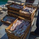 Qualité différente du poisson frais en vente au marché images libres de droits