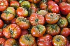 Qualitativer Hintergrund von den Tomaten Frische Tomaten Rote Tomaten Organische Tomaten des Dorfmarktes Stockfotos