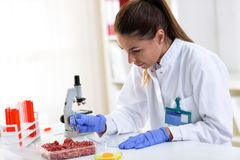 Quality control expert inspecting at food specimen. Checking meat and eggs stock photos