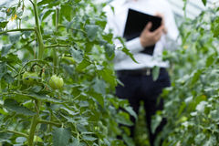 Quality control in greenhouse Stock Photography