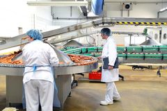 Quality control in a meat processing plant - production of sausages in a factory royalty free stock photos