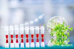 Quality control of sprouts with DNA amplification test,. Quality control with DNA amplification test, PCR strip for this assay and sample of cress salad for the Royalty Free Stock Photos