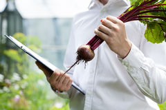 Quality controller checking beet condition Royalty Free Stock Photos