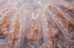 Qualle-Tentakel-Beschaffenheit Stockbild