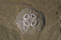 Quallen auf dem Strand Stockbild