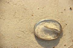 Quallen auf dem Strand Stockfotos