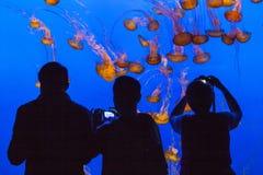 Quallen im blauen Meer Stockbild