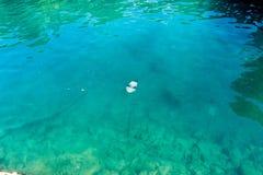 Quallen im Mittelmeer Lizenzfreies Stockfoto