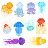 Quallenvektor-Ozeanquallen und Unterwassernesselfischillustrationssatz jellylike glühende Medusa im Meer stock abbildung